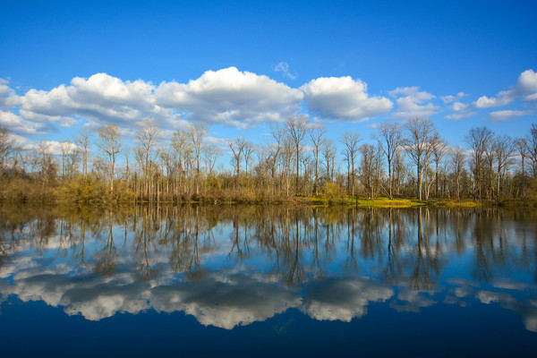 Who is ready for Spring? This photo, taken last April, reflects a beautiful day at Archer Island (pun intended). Near Greenville, Mississippi. See more at www.instagram.com/johnmontfort